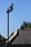 03_Horbury_Seagull_roof