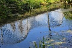 Springline III water